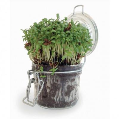 Bocal à graines publicitaire, kit de plantation complet, croissance et développement, plante, goodies écologique