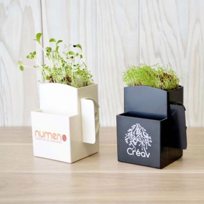 kit de plantation graines arbres plantes objet publicitaire écologique green Vegetal box