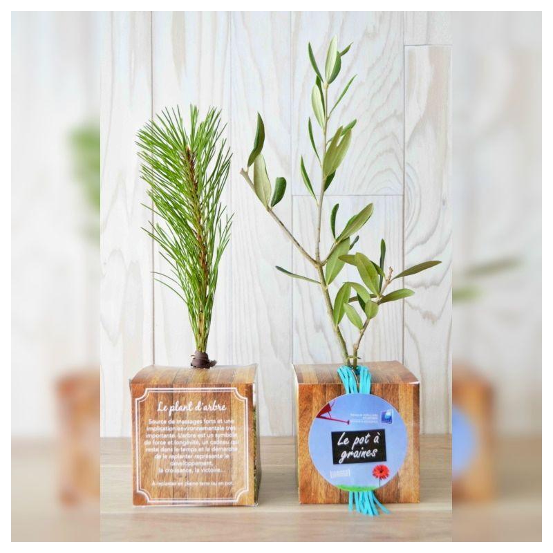 Baby plante mini cactus petite succulente porte clé - Ant Apple (Rhipsalis burchelli) - pet tree