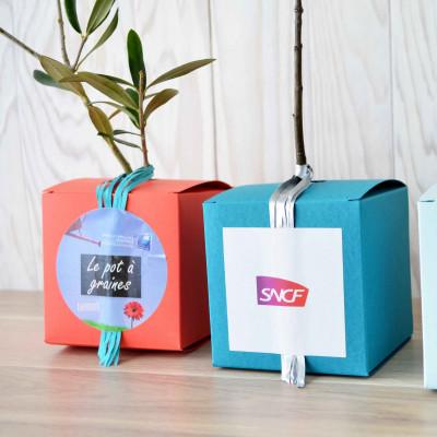 Cube Arbre, plant d'arbre objet publicitaire, cadeau séminaire entreprise, incentive, écologique, communication