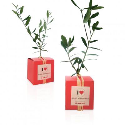 Baby plante mini cactus petite succulente porte clé - Aurora cactus (Mammillaria prolifera) - pet tree