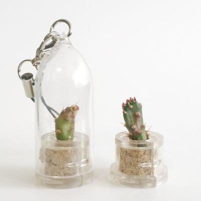 Babyplante Golden Marble - Mini plante cactus porte clé