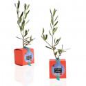 Baby plante mini cactus petite succulente porte clé - Blue Jade (Sedum Burrito) - pet tree
