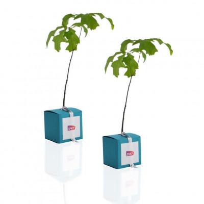 Baby plante mini cactus petite succulente porte clé - Eve's needle (Austrocylindropuntia subulata) - pet tree