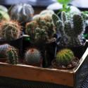 Baby plante petite succulente mini cactus personnalisée meilleurs voeux