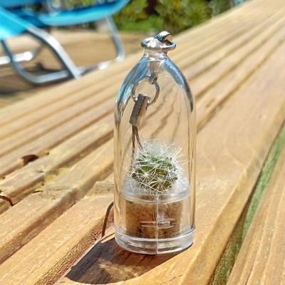 Babyplante Green Jewel - Rebutia minuscula - mini plante cactus porte clé