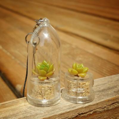 Babyplante Little Gem - Mini plante cactus Sedum australe Rose Orpin porte clé
