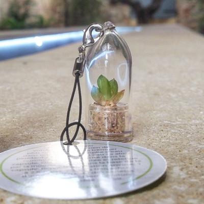 Babyplante Minibocho (Haworthia cooperi var. truncata) - Mini plante cactus porte clé