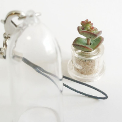 Babyplante Nymph's tulip porte clé mini plante cactus Crassula rupestris Hottentot
