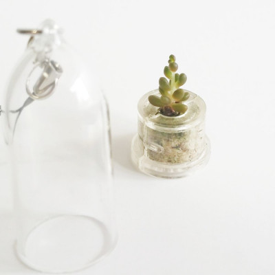 Babyplante Pink Jade Mini plante cactus Sedum rubrotinctum R.T. Clausen porte clé