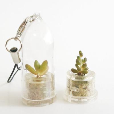 Babyplante Pink Jade porte clé - Mini plante cactus Sedum rubrotinctum R.T. Clausen