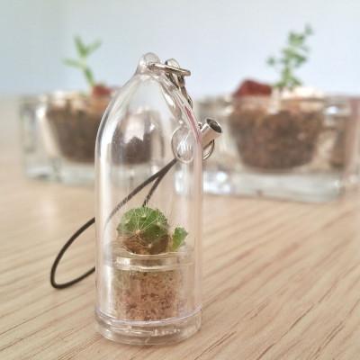Babyplante Green Jewel porte clé cactus