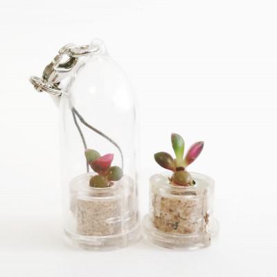 Babyplante Stone Rose porte clé mini cactus