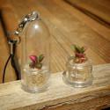 LOT Sélection de babyplantes mini plantes minicactus