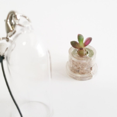 Babyplante Stone Rose mini cactus porte clé