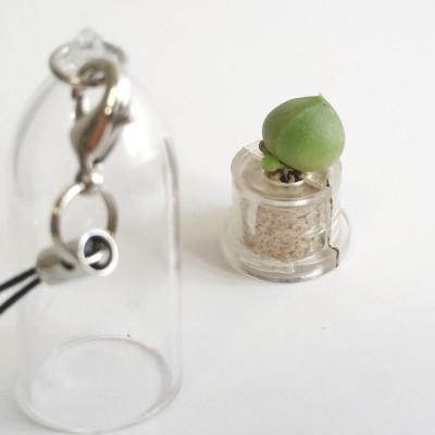 porte clé Babyplante String of Pearls - Mini plante cactus Senecio rowleyanus
