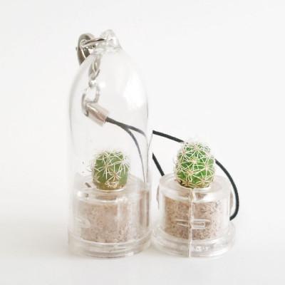 Babyplante Snow Cactus Mammillaria gracilis porte clé plante