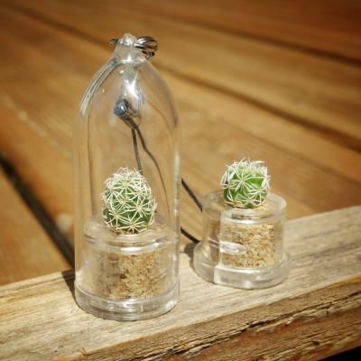 Babyplante Snow Cactus Mammillaria gracilis porte clé mini plante