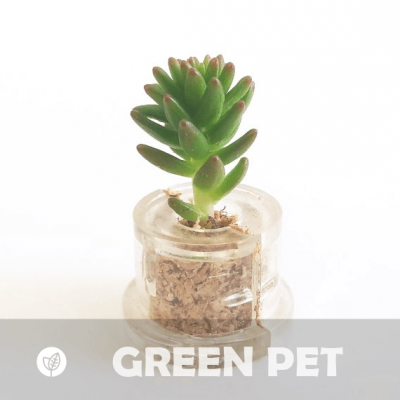 Babyplante Green Pet (Sedum spiral staircase)