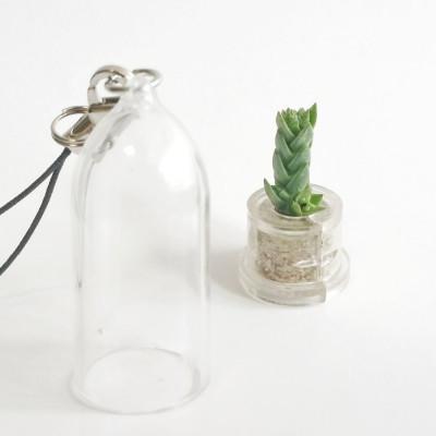 Babyplante Noctop mini plante cactus Crassula Pyramidalis porte clé