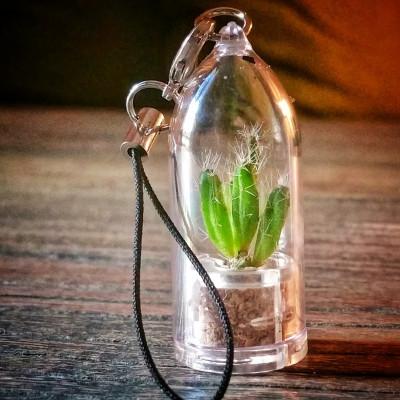 Vraie petite mini plante Rhipsalis burchelli en porte clé