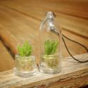 Baby plante mini cactus petite succulente porte clé - Black Phoenix (Kalanchoe Houghton's Hybrid) - pet tree