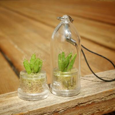 Babyplante mini plante Ant Apple Rhipsalis burchelli en format porte clé, et sans la capsule