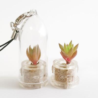 Babyplante Rock Flower mini plante cactus Orostachys Japonica porte clé