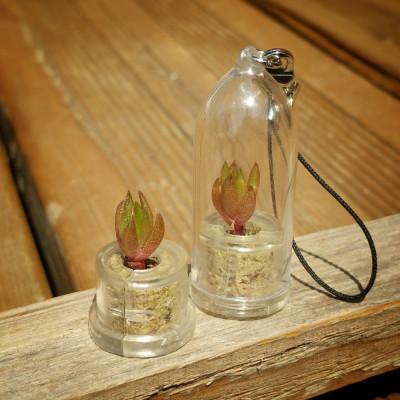 Babyplante Rock Flower mini cactus Orostachys Japonica porte clé