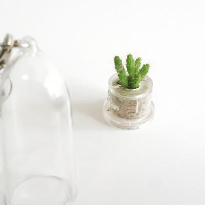 Petit mini Rhipsalis burchelli - bouture pour babyplante