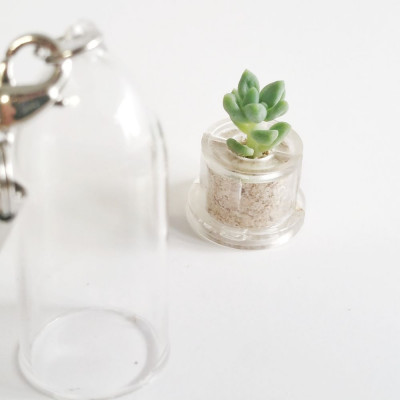 Babyplante Neo Angel - Mini plante cactus Cremnophila Linguifolia porte clé