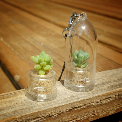 Babyplante Neo Angel cactus Cremnophila Linguifolia mini plante porte clé