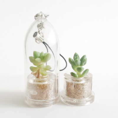 Babyplante Neo Angel - Mini plante cactus Cremnophila Linguifolia