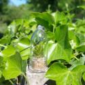 10 graines Lithops Optica - Plante cailloux