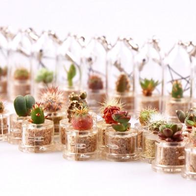Ce lot sera composé entre 12 et 20 variétés différentes de mini cactus et de mini plantes grasses que nous avons en stock.