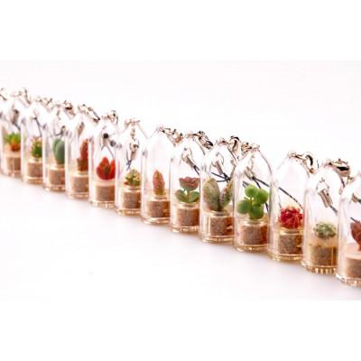 Lot babyplantes mini plante cactus porte clé cloche