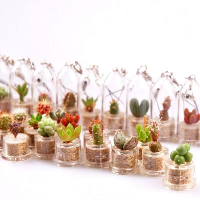 Lot babyplantes plusieurs variétés cactus succulentes porte clé plante