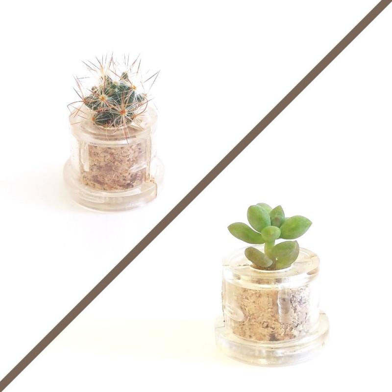 Sélection de mini plantes cactus piquantes ou non piquantes