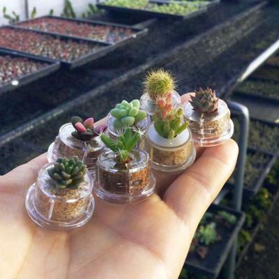 Lot de mini cactus et de mini plantes grasses que nous avons en stock