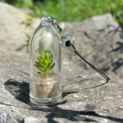 Lot babyplantes porte clé cylindre - sélection mini plante grasse ou cactus