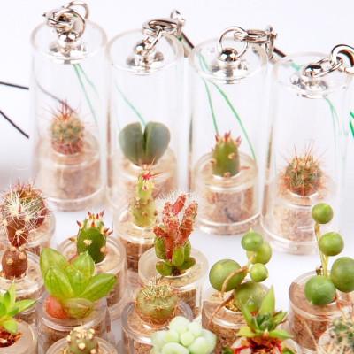 Lot de différentes variétés de mini cactus et de mini plantes grasses