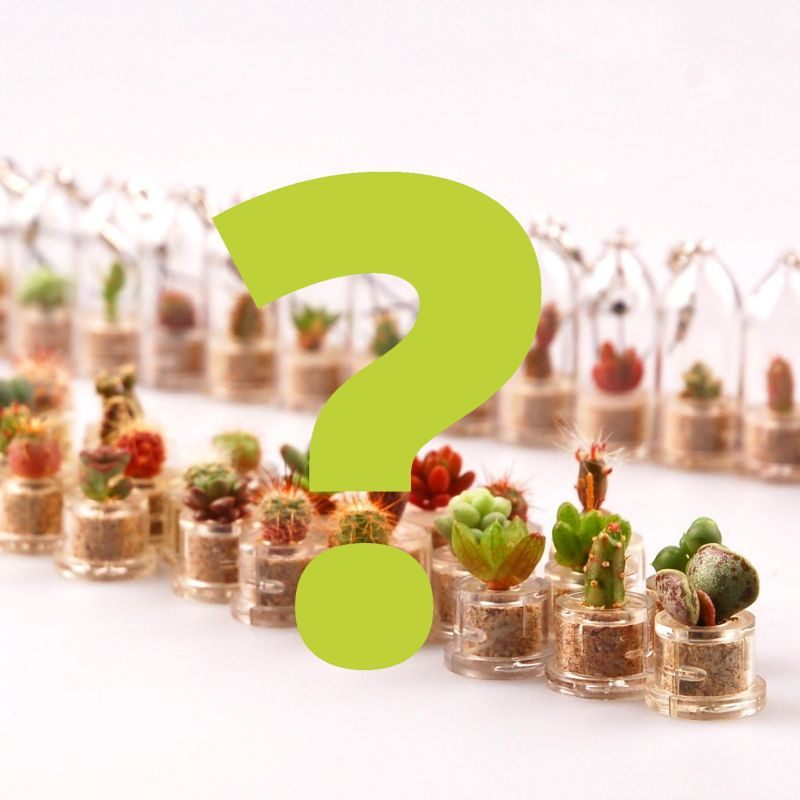 Babyplante CHANCE sélectionnée au hasard dans le stock - Baby plante mini cactus petite succulente porte clé pet tree