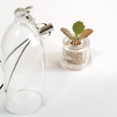 Green Cactus (Notocactus ottonis)