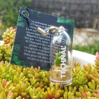 Goodies, porte clé, objet publicitaire écologique, cadeau nature, babyplantes mini plantes cactus personnalisées.