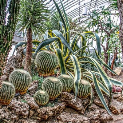 Cactus, plantes grasses, succulentes rares à cultiver en intérieur, en serre, en véranda ou dans une rocaille