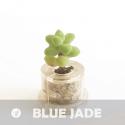 Baby plante mini cactus petite succulente porte clé - Minibocho (Haworthia cooperi var. truncata) - pet tree