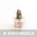 Baby plante mini cactus petite succulente porte clé - Stone Rose (Anacampseros rufescens) - pet tree